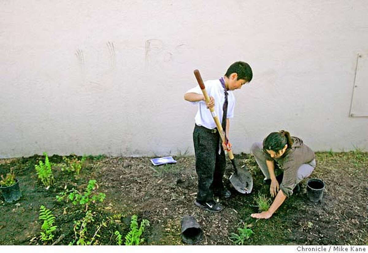 GREENSKULS_079_MBK.JPG Fourth grade teacher Sonia Lee helps her student Nathan Saechao plant grass in a garden along side a building at Willie Brown Jr. Elementary in San Francisco, CA, on Thursday, March, 29, 2007. photo taken: 3/29/07 Mike Kane / The Chronicle ** (cq)