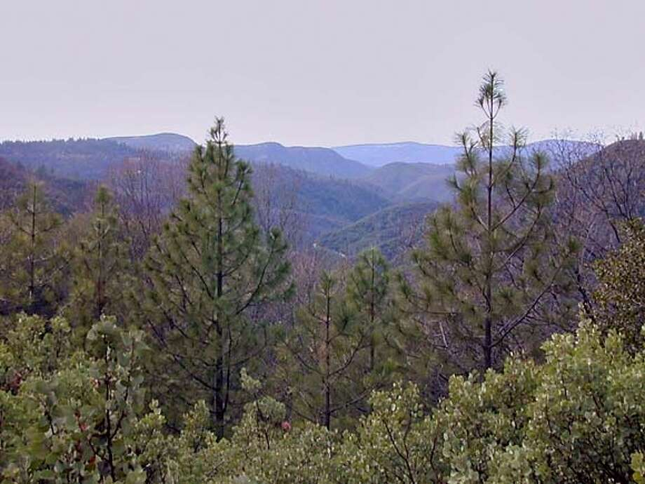 for for-site15, of the Sierra Foothills near Nevada City Photo: H.o.