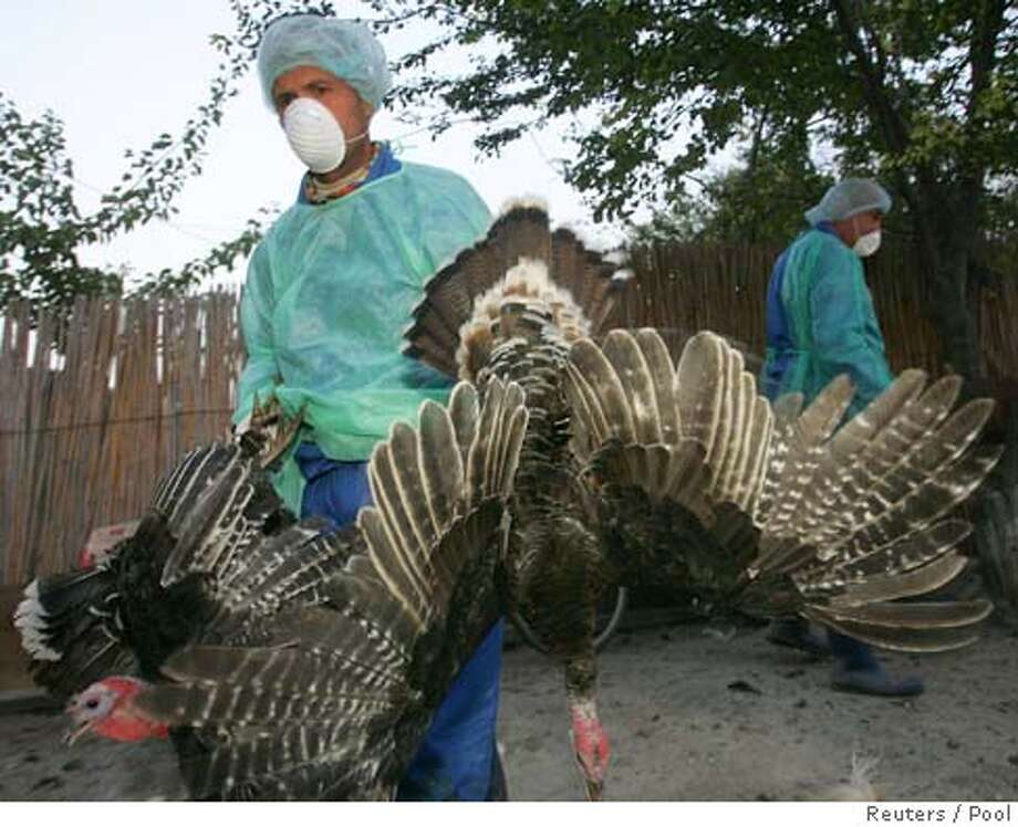 A veterinary worker carries domestic birds to be killed on suspicion of bird flu disease in the village of Ceamurlia de Jos, 300 km ( 186.4 miles) of Bucharest, October 13, 2005. A strain of avian influenza has been detected in samples from Romanian ducks, confirming that the virus has arrived in Europe, Romania's chief veterinarian and the European Commission said on Thursday. REUTERS/Pool Ran on: 10-14-2005  A health worker carries domestic birds to be killed on suspicion of bird flu near Bucharest, Romania. Photo: POOL