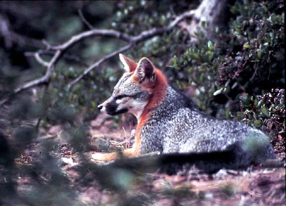 7/13/03 | B/W-Paginated | 5star | full at 162 dpi | a22 | Metro | burr, 8437 | fox Photo: Alan Hopkins