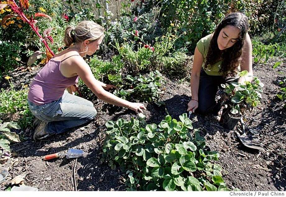 Andrea Parker (left) and Corey Block transplants strawberries on 10/7/05 in Oakland, Calif. Sustaining Ourselves Locally (SOL) is an urban farming project started two years ago by a small group of young gardeners and environmental educators who set out to prove that fertile ground can be found in the least expected places. SOL currently consists of nine members, all of whom live in apartments above a 5,000 foot yard that they have successfully transformed from a largely abandoned dump site to a flourishing organic urban farm.  PAUL CHINN/The Chronicle Photo: PAUL CHINN