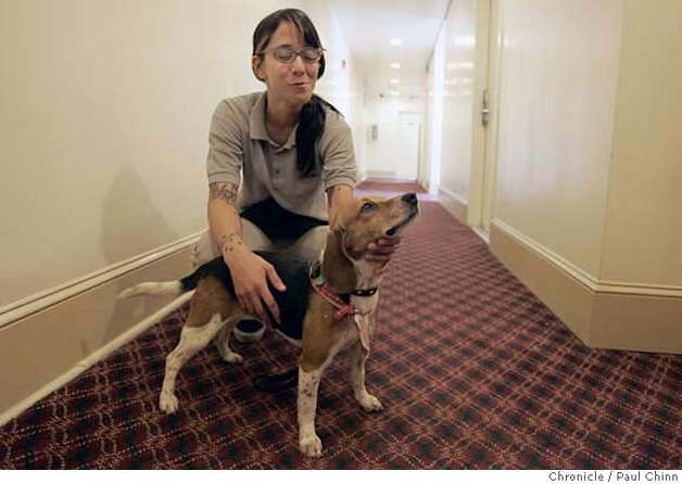 Ladybug the beagle and her handler Sarah Trigueros searched for bedbugs at the Empress Hotel in San Francisco, Calif. on Friday, April 6, 2007. Ladybug is a specially-trained dog able to detect bedbugs with her keen sense of smell. The National Pest Management Association reports a 71 percent increase in bed bug calls since 2000.  PAUL CHINN/The Chronicle  **Sarah Trigueros Photo: PAUL CHINN