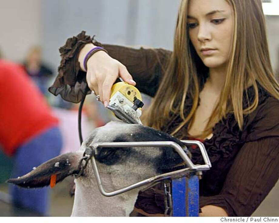 Alexa Leventini of Santa Rosa grooms her lamb for competition in a 4-H Junior Classic Lamb category at the Grand National Rodeo and Livestock Show at the Cow Palace in Daly City, Calif. on Friday, April 6, 2007. The Grand National Foundation that awards roughly $7000 in scholarships to 4-H kids to participate in these competitions. Their mission is to support youth in agriculture.  PAUL CHINN/The Chronicle  **Alexa Leventini Photo: PAUL CHINN