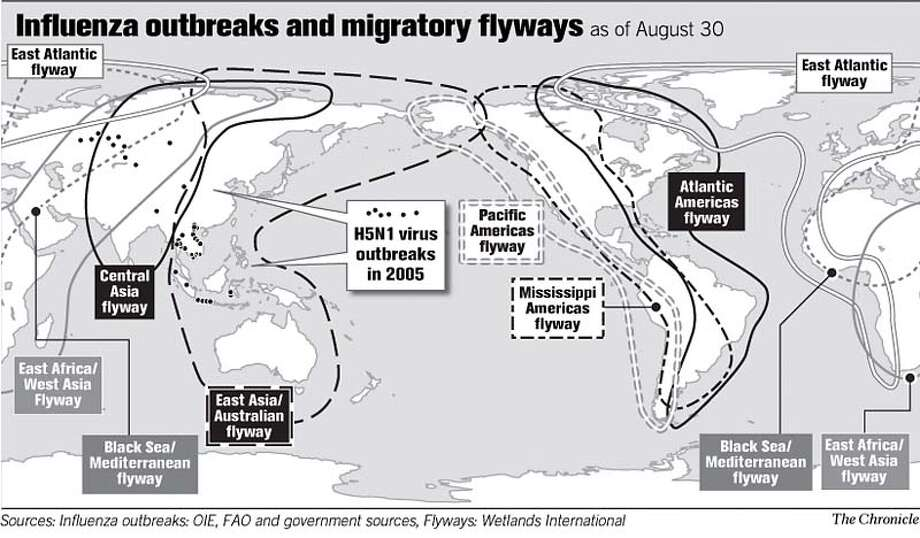 Influenza Outbreaks and Migratory Flyways. Chronicle Graphic