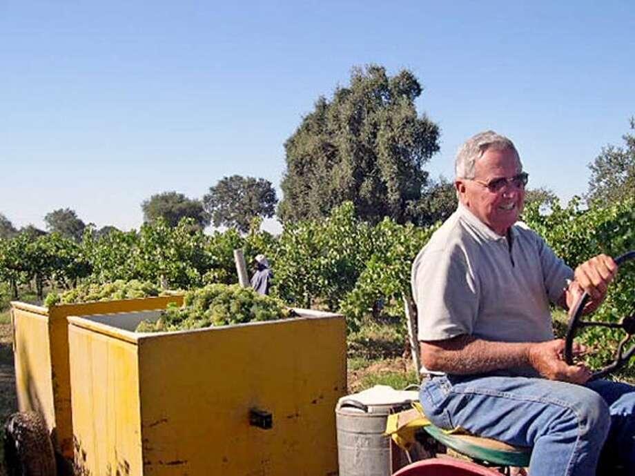 EVANS24_PH2.JPG Manuel Machado with handpicked grapes. Lynette Evans/ SAN FRANCISCO CHRONICLE Photo: Lynette Evans