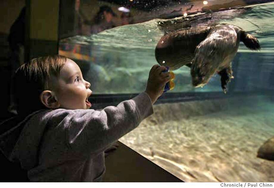 Corbin Whitney of Prundale is mesmerized by an African spotted-necked otter swimming at the new Wild About Otters exhibit at the Monterey Bay Aquarium in Monterey, Calif. on Saturday, March 17, 2007. Six African spotted-necked otters and four Asian small-clawed otters will entertain aquarium visitors until September 2010.  PAUL CHINN/The Chronicle  **Corbin Whitney MANDATORY CREDIT FOR PHOTOGRAPHER AND S.F. CHRONICLE/NO SALES - MAGS OUT Photo: PAUL CHINN