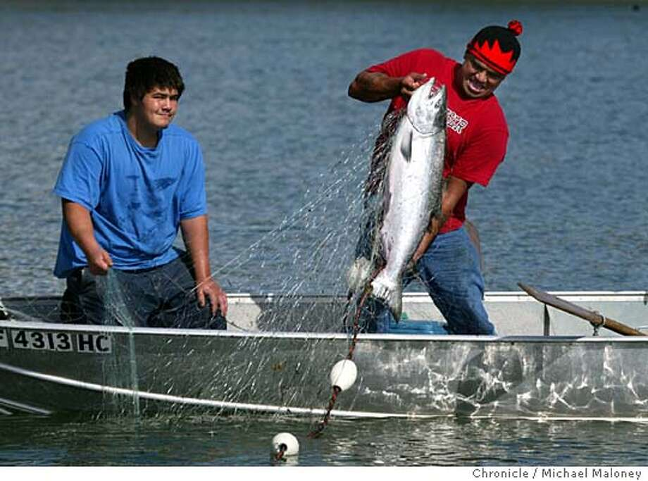 Yurok tribal member pulls up a 30 lb salmon as his son Derrick Lewis (16) watches. It was their 1st salmon catch of the fall season.  Yurok tribal member Fred Lewis of Eureka teaches his 16 year old son Derrick Lewis how to fish for salmon the traditional way with gill nets. They were fishing the mouth of the Klamath River where fall run salmon were entering the river. Only tribal members are allowed to fish by nets.  A look at the the Yurok tribe and the Klamath River where the kayakers are camped after their Day 3 paddle from Crescent City to the mouth of the Klamath River.  Rediscovering California's North Coast. A kayak voyage by Paul McHugh, Bo Barnes and John Weed. A paddle from the Oregon border to the SF bay.  Photo taken on 9/10/05 in Klamath, CA by Michael Maloney / San Francisco Chronicle Photo: Michael Maloney
