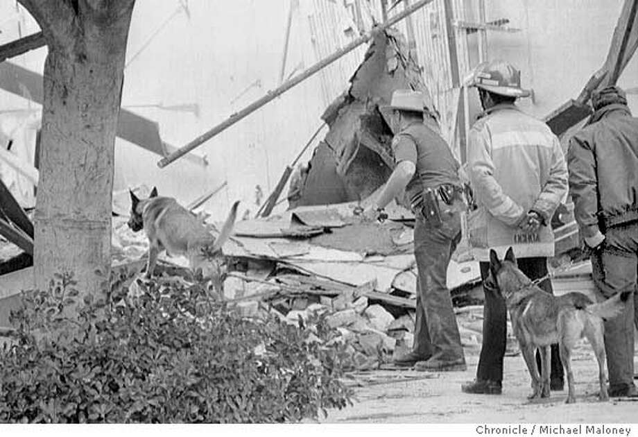 LOMA PRIETA EARTHQUAKE OCTOBER 17, 1989 , FORD'S DEPARTMENT STORE, PACIFIC GARDEN MALL, SANTA CRUZ PHOTO TAKEN 10/20/89 Ran on: 09-19-2005  The 1989 Loma Prieta earthquake severely damaged the Pacific Garden Mall in Santa Cruz. A dog searches the rubble. Ran on: 09-19-2005  The 1989 Loma Prieta earthquake severely damaged the Pacific Garden Mall in Santa Cruz. A dog searches the rubble. Photo: MICHAEL MALONEY