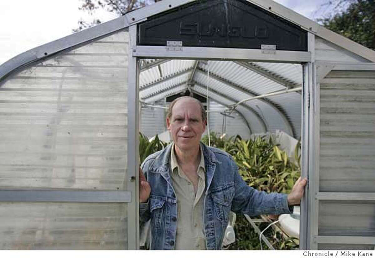 MARIJUANA_124_MBK.JPG Ed Rosenthal, longtime Bay Area marijuana activist and writer, poses in front of a greenhouse filled with orchids at his office in Oakland, CA, on Wednesday, March, 14, 2007. photo taken: 3/14/07 Mike Kane / The Chronicle **Ed Rosenthal MANDATORY CREDIT FOR PHOTOG AND SF CHRONICLE/NO SALES-MAGS OUT