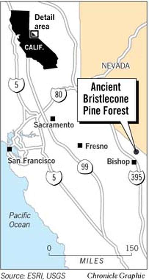 Ancient Bristlecone Forest. Chronicle Graphic