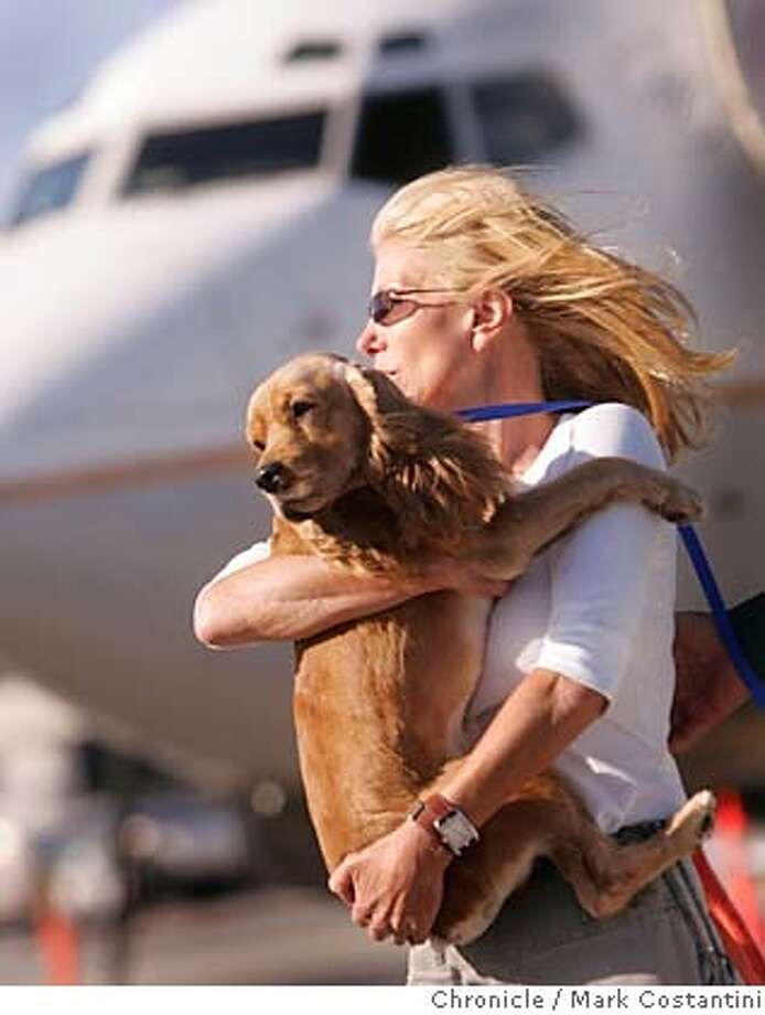 Dogs rescued from hurricane Katrina fly into SFO on Continental Airlines. Animals were brought in by Chris Penrod, pictured, carrying a rescued dog, , who's sister is married to T. Boone Pickens, who paid for the mission  Photograph by Mark Costantini/S.F. Chronicle. Photo: Mark Costantini