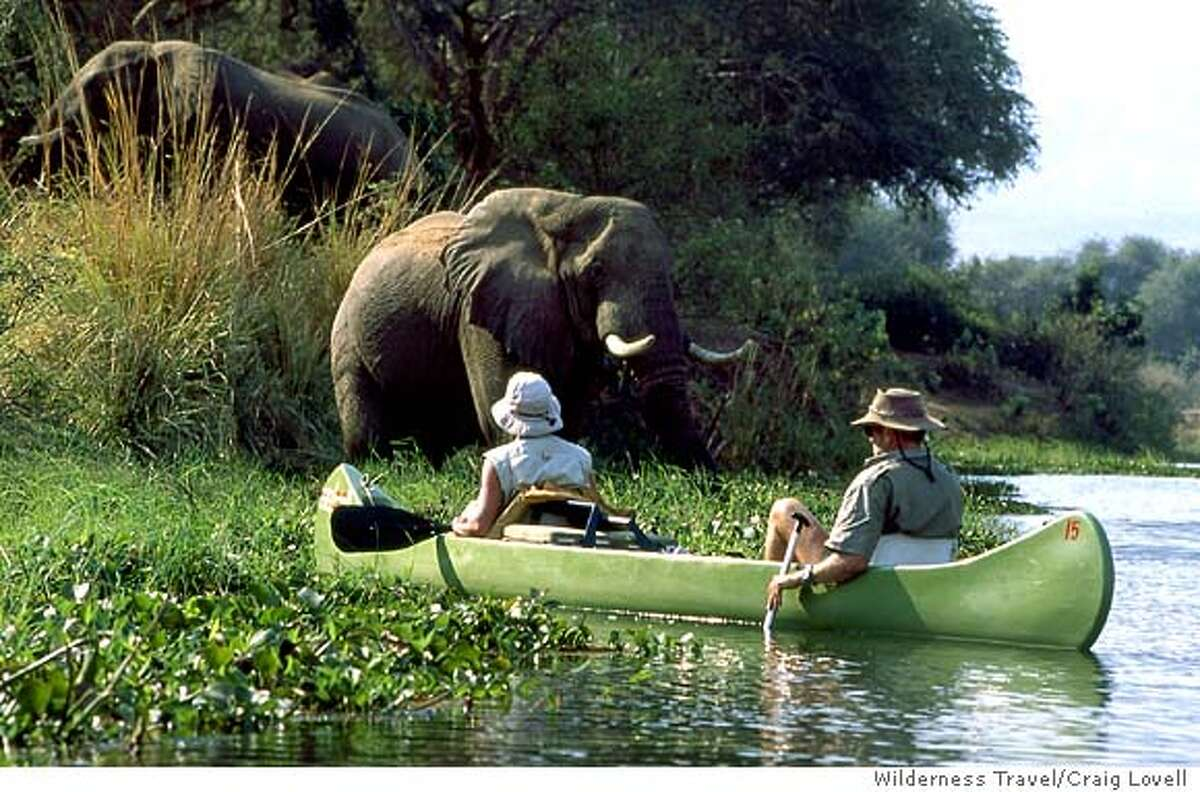 Elephants on Wilderness Travel's Botswana Wildlife Safari. Wilderness Travel photo by Craig Lovell