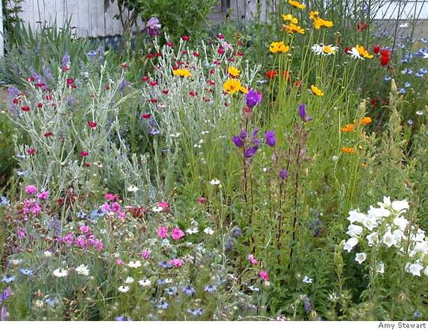 Stewart's annuals include coreopsis, love-in-a-mist, rose campion, campanula. Photo by Amy Stewart