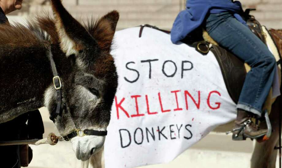 Protestors use donkeys to deliver a petition with 100,000 signatures asking Gov. Rick Perry to stop Texas Parks and Wildlife from hunting wild burros in Big Bend Ranch State Park and protest, Wednesday, Jan. 18, 2012, in Austin, Texas. The state agency considers the 300 wild donkeys that live in the park to be a destructive invader, but the Wild Burro Protection League considers the burros a heritage species because it played such an important role in human settlement of the area. (AP Photo/Eric Gay) Photo: Eric Gay, Associated Press / AP