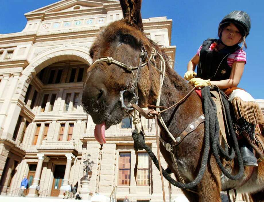 Cheyenne Rondeaux, 9, rides a donkey Wednesday Jan. 18, 2012 outside the capitol in Austin after she and members of the Wild Burro Protection League delivered a petition to the governor's office asking him to order the Texas Parks and Wildlife Department to stop killing wild burros in Big Bend Ranch State Park.  (William Luther/wluther@express-news.net) Photo: William Luther, San Antonio Express-news / © 2012 SAN ANTONIO EXPRESS-NEWS