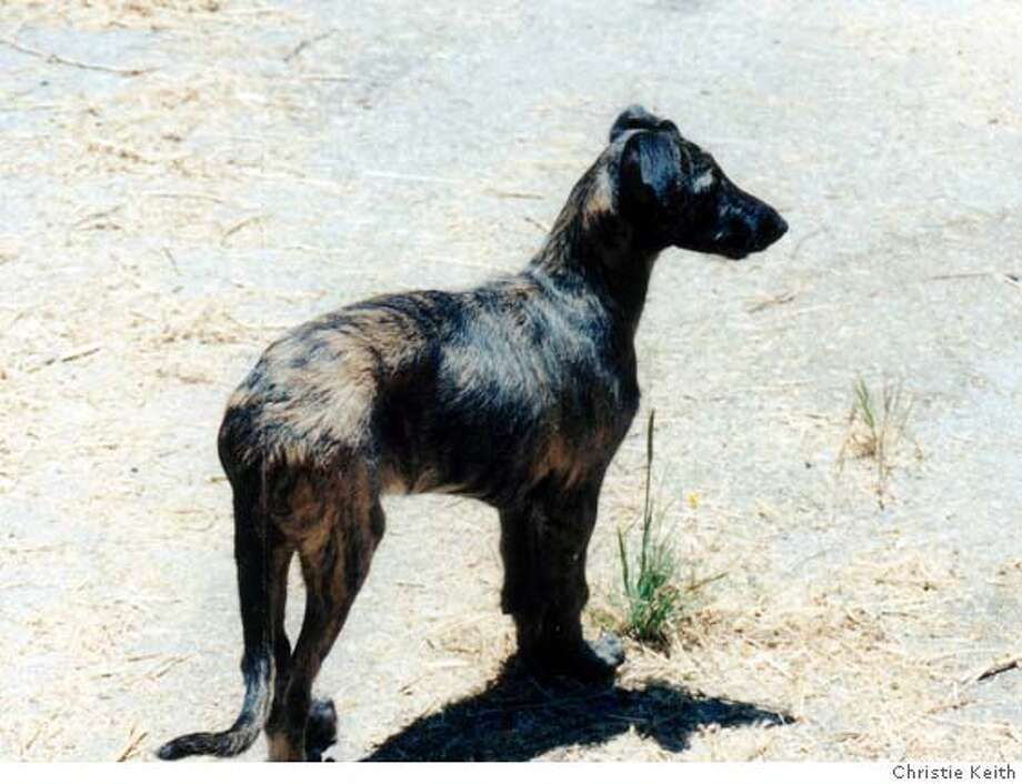 Bran at around 9 weeks old, in the Santa Cruz mountains. Photo by Christie Keith