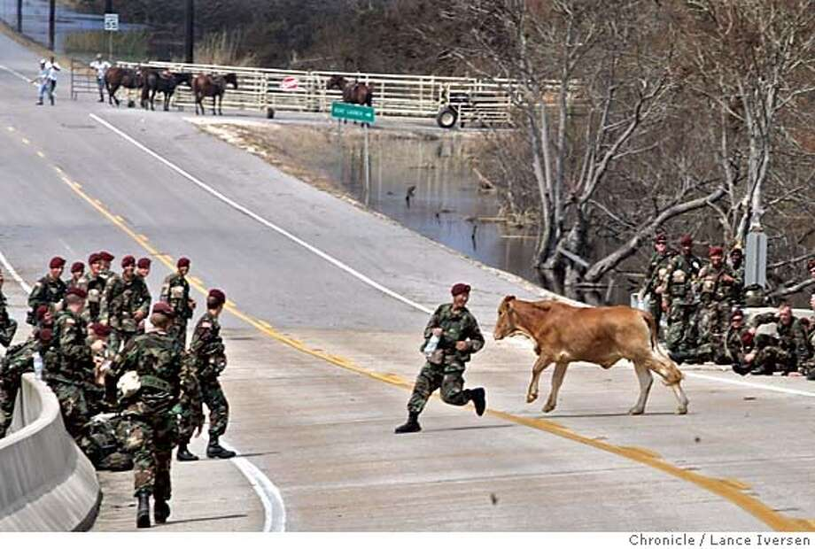 RITA26_0947.jpg_  Pvt Steven Wan from the 82nd Airborne, Ft Bragg is chased by steer after the animal broke away from Cameron Parish ranchers during a rescue roundup. The cattle were stranded in flooded waters since hurricane Rita damaged or obliterated most of the home that are now under water leaving the 9,800 residence home less. By Lance Iversen/San Francisco Chronicle MANDATORY CREDIT PHOTOG AND SAN FRANCISCO CHRONICLE. Photo: Lance Iversen
