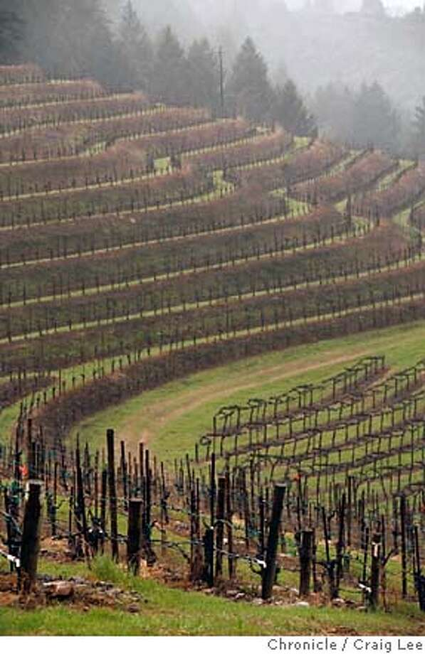 MOUNTAIN02162_cl.JPG  Story on wine from mountain vineyards. Photo the vineyard of Terra Valentine above St. Helena.  Event on 2/21/07 in St. Helena. photo by Craig Lee / The Chronicle MANDATORY CREDIT FOR PHOTOG AND SF CHRONICLE/NO SALES-MAGS OUT Photo: Photo By Craig Lee