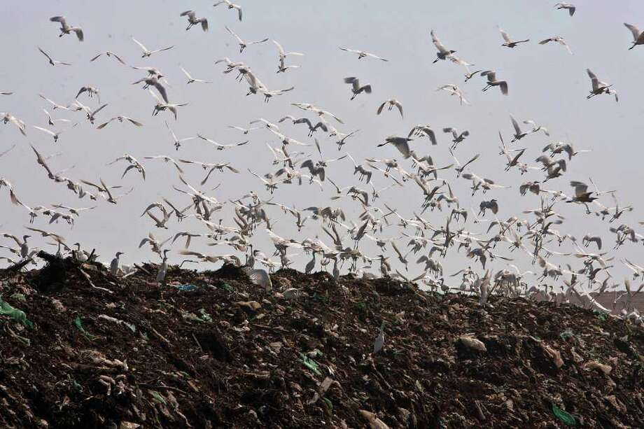 Birds fly over garbage at the Bordo Poniente landfill on the outskirts of Mexico City December 19, 2011. Mexico City will close one of the world's largest dumps by Dec. 31 and will instead turn the garbage from millions of people into reusable materials and energy, Mayor Marcelo Ebrard announced Monday. Photo: Christian Palma, Associated Press / AP