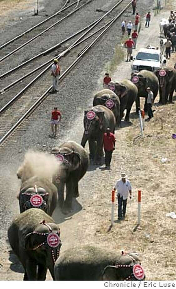 circus_029_el.JPG  Elephants being led along the tracks near the Oakland Arena after being unloaded from the train that brought them in.  Ten performing pachyderms and 18 magnificent horses will step off the Ringling Bros. and Barnum & Bailey� circus train to make their way a half-mile through the city to the Oakland Arena. In keeping with 135 year-old Ringling tradition, this lumbering pachyderm parade truly heralds the arrival of The Greatest Show On Earth.  Ringling Bros. and Barnum & Bailey� 135th Edition of The Greatest Show On Earth plays in Oakland at the Oakland Arena Aug. 17 � 21, followed by engagements in San Jose at the HP Pavilion Aug. 24 - 28, and at the Cow Palace in San Francisco Aug. 31 � Sept. 5. Event on 8/16/05 in Oakland Eric Luse / The Chronicle MANDATORY CREDIT FOR PHOTOG AND SF CHRONICLE/ -MAGS OUT Photo: Eric Luse