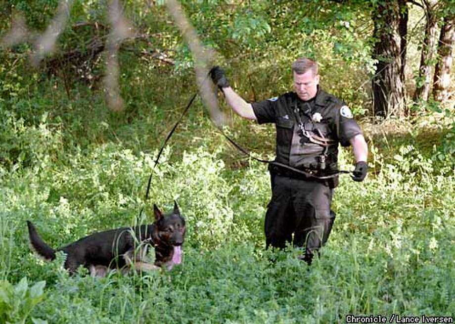 Concord police officer David Hughes works his dog Aries in a wooded area ajacent to the Contra Costa Canal Trail off Cowell Rd at Davis Ave late tuesday night after a violent attack on the trail. By LANCE IVERSEN/SAN FRANCISCO CHRONICLE Photo: LANCE IVERSEN
