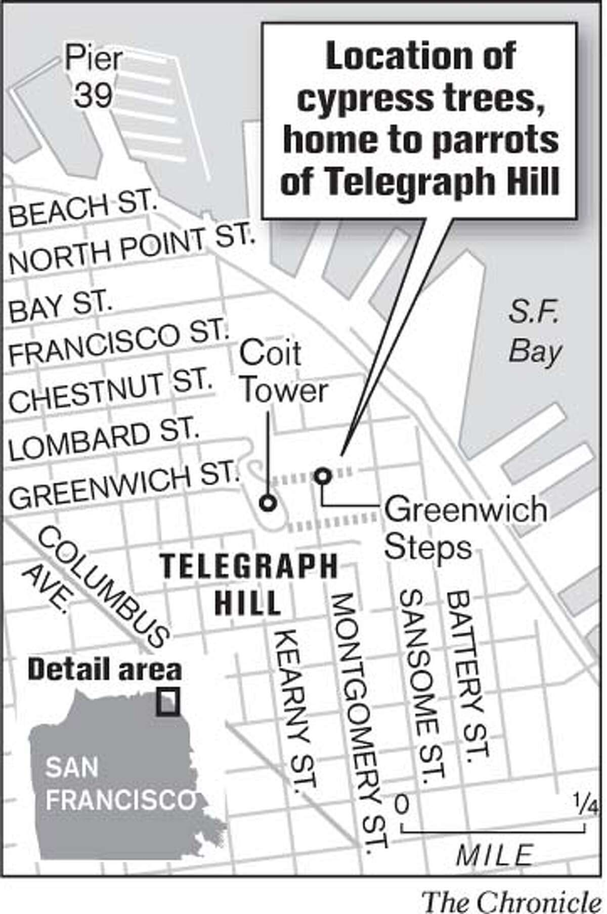 Location of Cypress Trees, Home to Parrots of Telegraph Hill. Chronicle Graphic