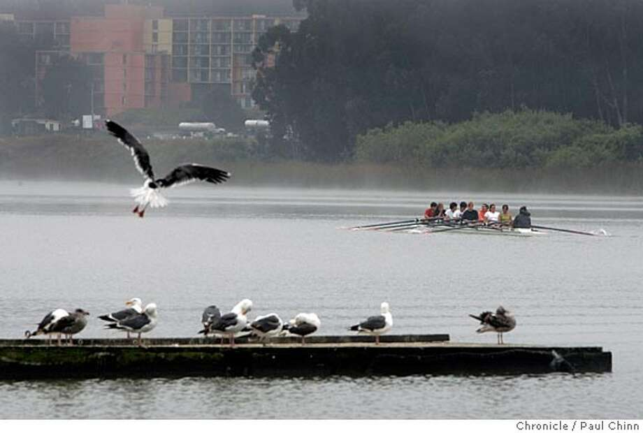 A seagull comes in for a landing on an unused dock after rowers head out for a morning workout on Lake Merced. Kids attending a summer rowing camp prepare to launch their boats from the Pacific Rowing Club at Lake Merced on 7/15/05 in San Francisco, Calif. The restaurant at the Boathouse has been closed for two years and the city hasn't yet found a new tenant. Four rowing clubs still store their boats in the garages on the lower level. Apparently the abandoned building attracts people who drink on the grounds near the lake and toss their empty bottles on the driveway by the garages which is a source of concern to the coaches.  PAUL CHINN/The Chronicle Photo: PAUL CHINN