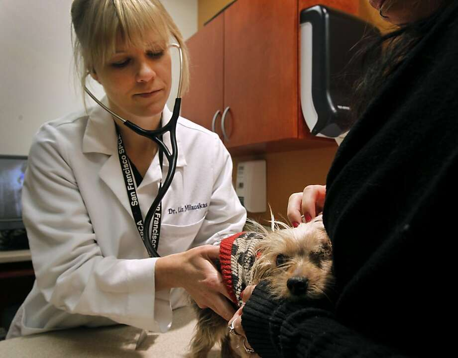 Dr. Liz Milauskas examinesToto at the San Francisco SPCA in San Francisco, Calif. on Wednesday, Jan. 18, 2012. Toto is receiving medical treatment after he was kidnapped from his Hayward home and returned several months later with several teeth missing and his left eye severely damaged. Photo: Paul Chinn, The Chronicle