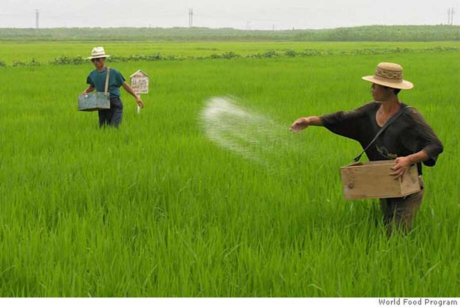 In this photo released by the World Food Program, North Korean cooperative farm workers spread fertilizers in a rice field Unpha county, North Hwanghae province, North Korea, on July 19, 2005. North Korea's government and aid agencies are running short of food, forcing millions of people to scavenge for acorns and grass, a spokesman for a U.N. food agency said. The World Food Program tries to feed about 6.5 million North Koreans, or more than one-quarter of the country's population. (AP Photo/World Food Program, Gerald Bourke, HO) ** EDITORIAL USE ONLY ** Ran on: 07-27-2005  North Korean farmers broadcast fertilizer in a rice field. The nation is running short of food. Photo: GERALD BOURKE