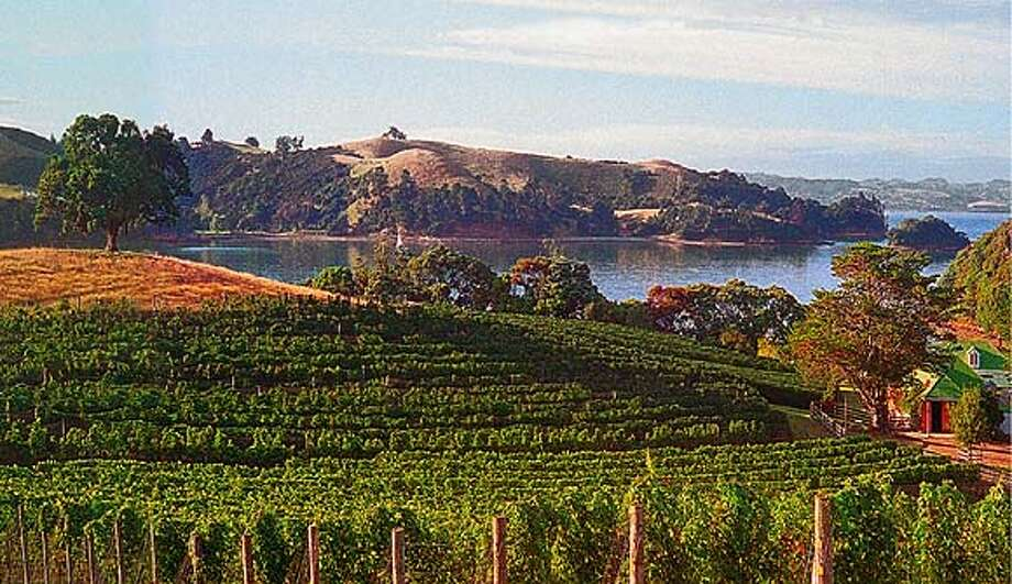 This photo shows the Goldwater red wine vineyard overlooking Putiki Bay on  Waiheke Island.  (HANDOUT PHOTO) Photo: HANDOUT