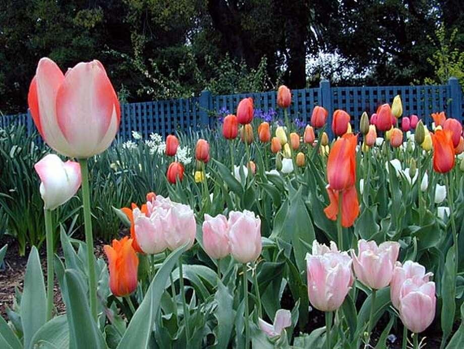 """""""Every Garden Has a Story"""" Spring Garden Tour HANDOUT PHOTO Photo: HO"""