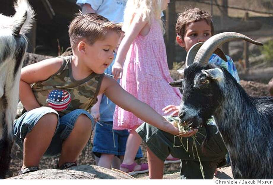 Justin Baker, 4 of Brentwood, feeds a goat at the Oakland Children's Zoo on the official opening day.  Event on 7/16/05 in Oakland. JAKUB MOSUR / The Chronicle Photo: JAKUB MOSUR