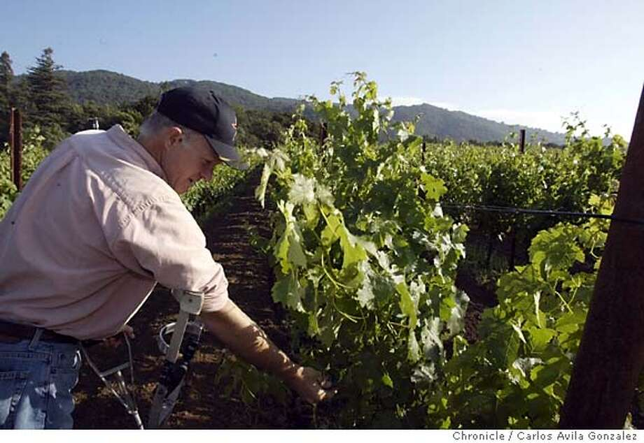 Patrick Campbell, owner of Laurel Glen Winery, looks over Cabernet grapes in his Glen Ellen vineyard on Monday, May 24, 2004. The U.S. Supreme Court agreed to hear the case on wineries' abilities to ship wines to consumers, across state lines: Campbell is a small boutique producer who would see his business enhanced - or threatened - if the Court determines sometime next year whether states can control the shipment of alcohol across their borders. If the Court rules for the states, it could spell the end of direct wine shipping in all states. Campbell has been an outspoken supporter of allowing direct shipments. Photo taken on mm/dd/yy, in San Francisco, Ca. Photo by Carlos Avila Gonzalez/The San Francisco Chronicle Photo: Carlos Avila Gonzalez