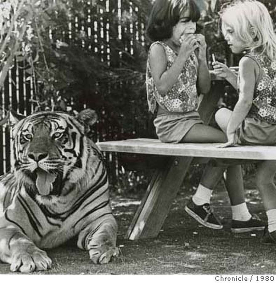 "Five Hundred pound Bengal tiger ""Nadji"" rests beside young lunchgoers at Marine World. Photo dated Sun, March 19, 1980. Photo: Chronicle Library"