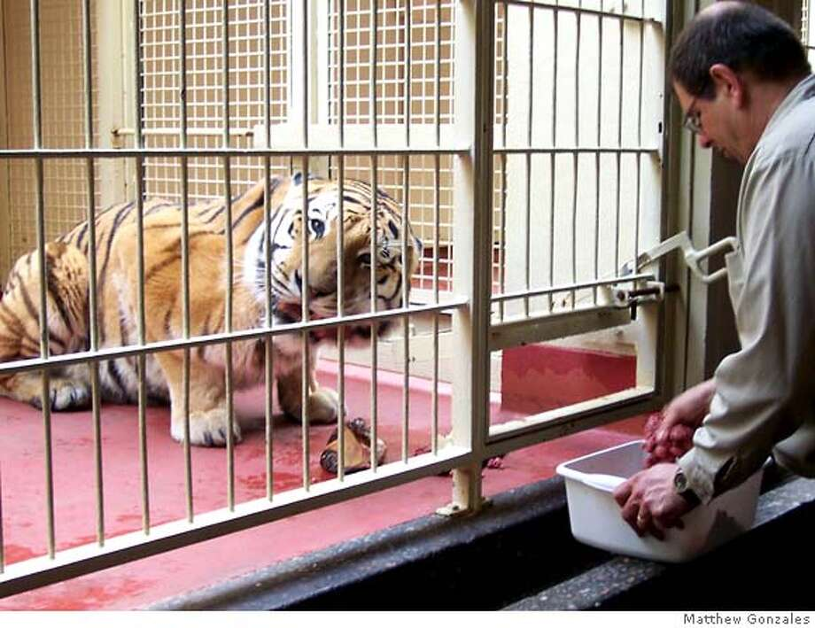 A zookeeper feeds a tiger at the San Francisco Zoo in this recent picture. Courtesy / Matthew Gonzales *NOTE: MATTHEW GONZALES TOOK THIS PICTURE AND UPLOADED TO FLICKR. WE HAVE HIS PERMISSION TO USE THE PICTURE* MANDATORY CREDIT FOR PHOTOGRAPHER AND SAN FRANCISCO CHRONICLE/ - MAGS OUT Photo: Matthew Gonzales