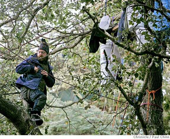 A tree-sitting protester balances on a branch while watching the activity below. UC police raided the base camp for tree-sitting protesters in front of Memorial Stadium in Berkeley, Calif. on Friday, Jan. 12, 2007. Police made no arrests when they made the pre-dawn raid but confiscated personal belongings of the campers. The tree sitters were not not disturbed and remain in the camped in the limbs.  PAUL CHINN/The Chronicle Photo: PAUL CHINN
