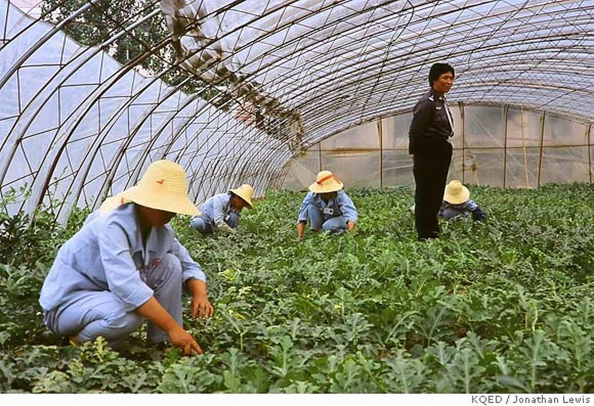 """CHINA FROM THE INSIDE �Re-education Through Labor.� Inmates at a labor camp for women outside Beijing hoe pumpkins under guard. Their offences involve drugs, sex, petty theft or """"social disturbances."""" This last includes petitioning for social justice. People in China can be sent to labor camps for up to four years without any trial or legal defence. Credit: Jonathan Lewis Producer: KQED San Francisco and Granada Television Contact: Meredith Gandy, KQED San Francisco, 415/553-2116 Ran on: 01-09-2007 Above: Inmates at a labor camp for women hoe pumpkins under guard for offenses including drugs, sex or social disturbances. Left: By 2010, China will be the largest user of fossil fuels in the world."""