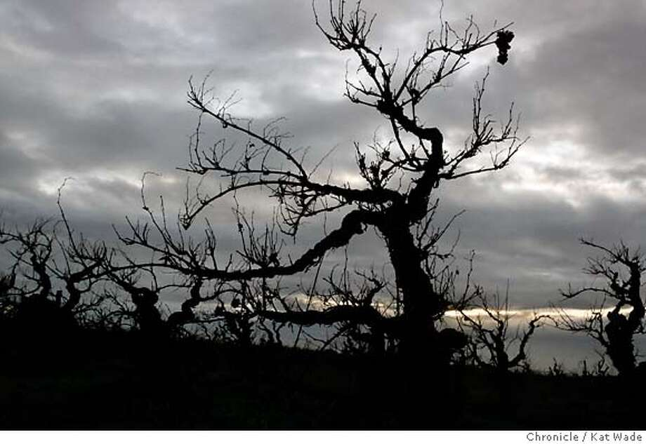 LODI12_0229_KW_.jpg  The Ghost vineyard has some of the oldest vines in the county in Acampo near Lodi on December 13, 2006.  Kat Wade/The Chronicle Mandatory Credit for San Francisco Chronicle and photographer, Kat Wade, Mags out Photo: Kat Wade