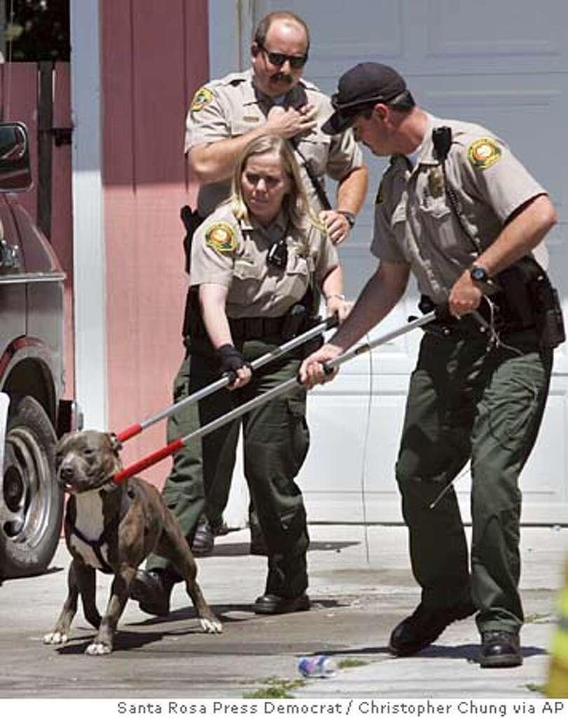 pit bull attacks in her santa rosa yard third mauling in