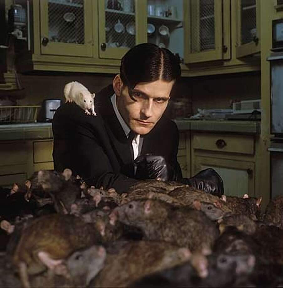 "Crispin Glover stars in New Line Cinema's ""Willard."" Photo: HO"