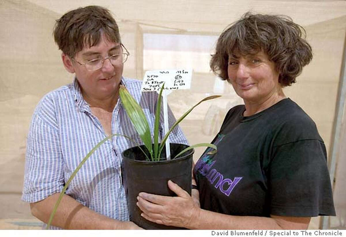 Kibbutz Katura, Israel: June 9, 2005: Dr. Elaine Solowey (left) and Dr. Sarah Solowey (right) holding the date tree that was succesfully germenated from a 2000 year old seed found on the ancient Jewish Archeological site of Masada. Photo by David Blumenfeld/Special to The Chronicle