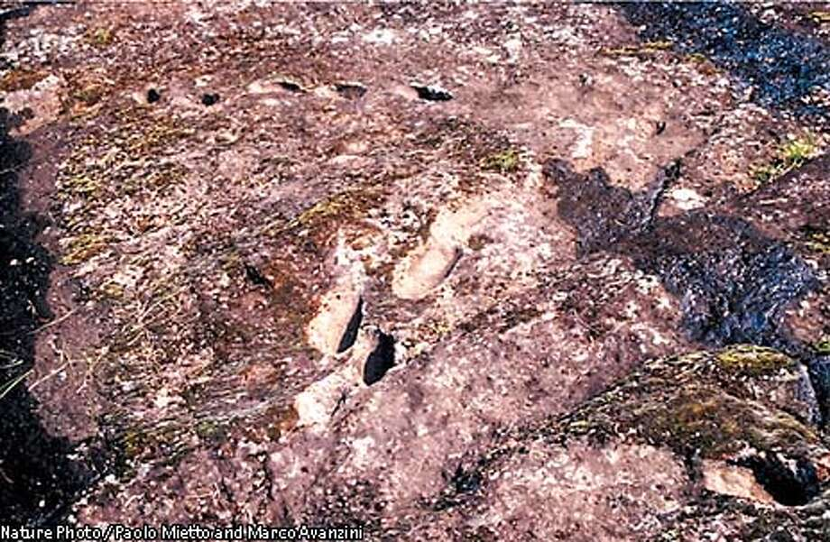 **FOR RELEASE AFTER 2 P.M.,EST, WEDNESDAY, MARCH 12,. 2003** An undated photo of a trail of human footprints, found in a volcanic pyroclastic flow dated to between 325,000-385,000 years ago, which were discovered at the Roccamonfina volcano in southern Italy. Italian scientists, as reported in Thursday's issue of the journal Nature, have discovered three fossilized trails of footprints that early humans left as they descended the treacherous flanks of an active volcano. The scientists believe the footprints arethe oldest such prints ever uncovered of Paleolithic humans, who preceded modern humans. (Nature Photo / Paolo Mietto and Marco Avanzini) Photo: PAOLO MIETTO AND MARCO AVANZINI
