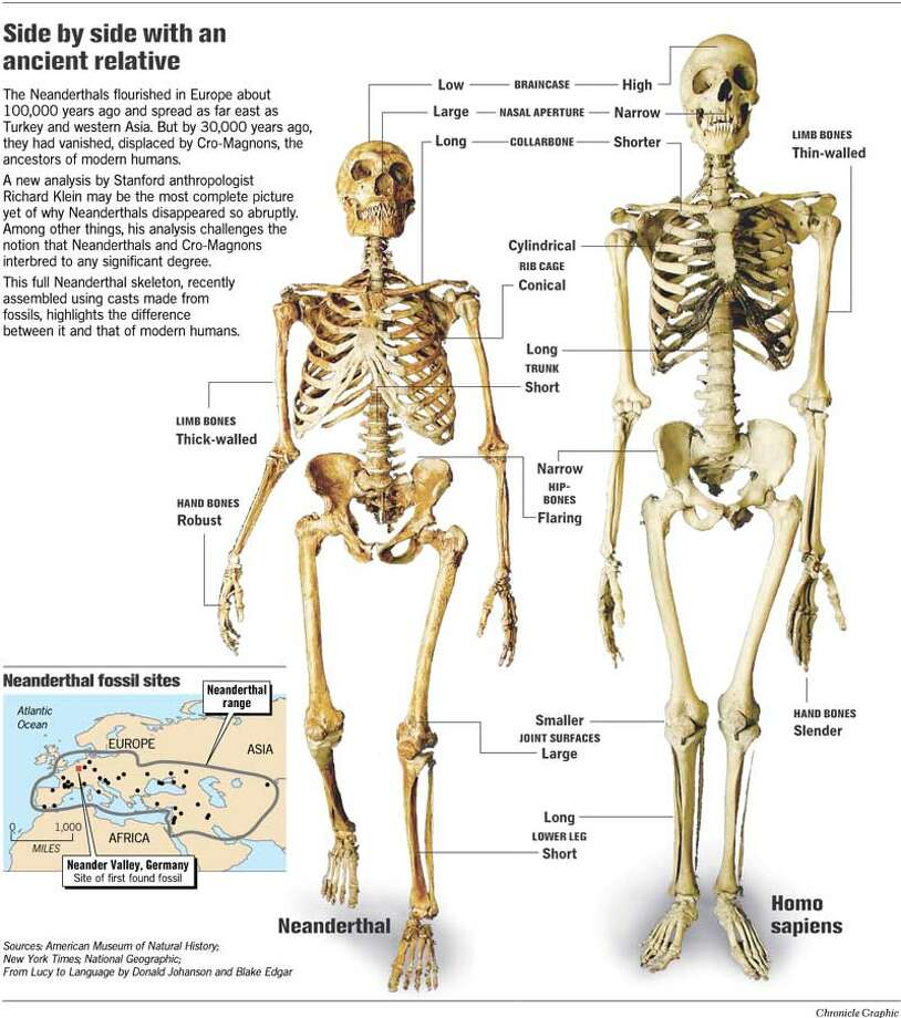 cutting neanderthals off the family tree / modern humans derive, Skeleton