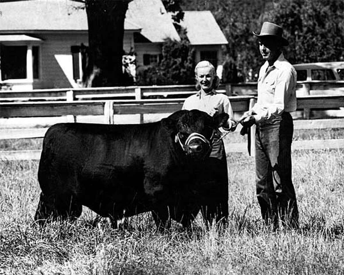 Fred MacMurray and his wife, June Haver MacMurray, posed with his prize bull, Pyros, at the ranch. Photo courtesy of MacMurray Family