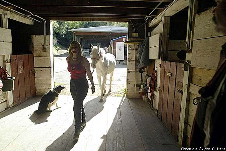 "MARIN STABLES, 139 WOOD LANE, FAIRFAX,Ca  Marin Stables, built in 1937 ""Magnus"" the ranch dog, oversees, Rebecca Roberts as she puts her horse in his stall after a ride.  photo/John O'Hara"