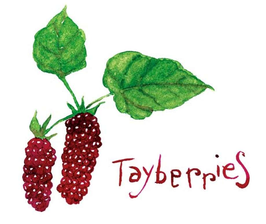 tayberries Photo: Tom Murray