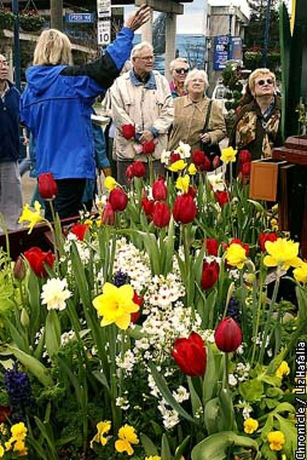 Tulipmania festival at Pier 39 has free tulip tours of the more than 39,000 tulips from all over the world. (PHOTOGRAPHED BY LIZ HAFALIA/THE SAN FRANCISCO CHRONICLE) Photo: LIZ HAFALIA