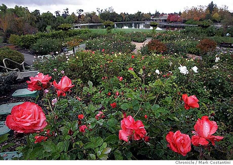 Rose garden portion of the gardens. Feature story on the Gardens at Heather Farm, which is holding a Teddy Bear Tea for kids in December. Story will focus on the event, as well as the organization and the gardens. Mark Costantini / The Chronicle Photo: Mark Costantini