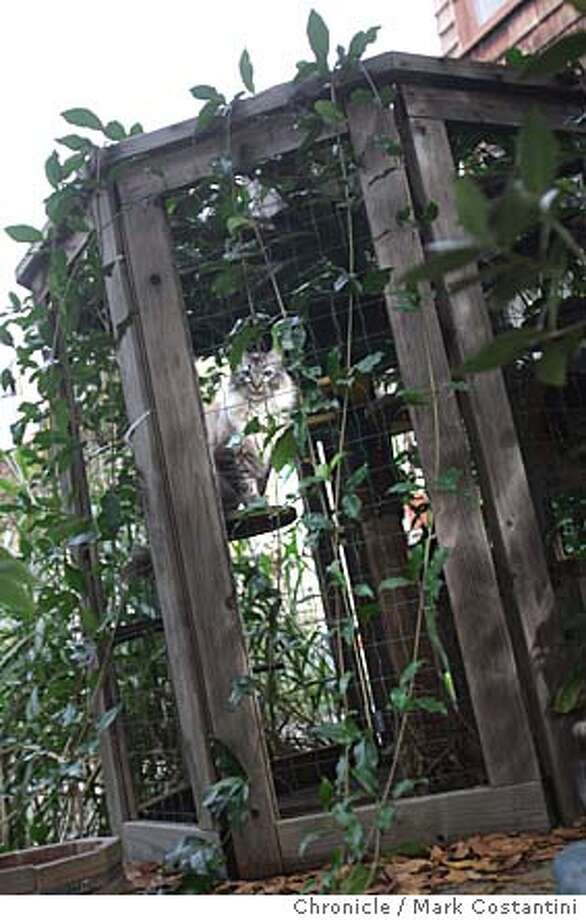 In Berkeley resident Linda McCormick's backyard, there is a tunneled enclosured for her cats.  Pet owners are coming up with a variety of innovative ways to make their homes pet-friendly, whether it's condos for the cats, baby gates for the dogs or water-filled pads to cool off when the weather heats up. Event on 10/30/04 in Berkeley. Mark Costantini / The Chronicle Photo: Mark Costantini