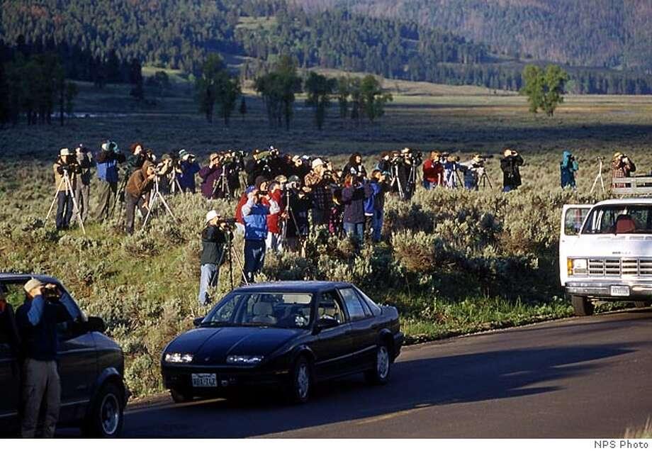 Wolf watchers in Yellowstone National Park. Credit: NPS Photo Photo: NPS Photo